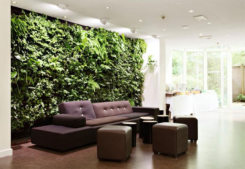 Description: green walls decorating houseplants